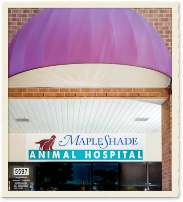 dale city veterinary